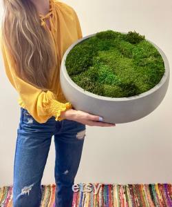 18 Moss Bowl de la pièce maîtresse de table Mousse préservée