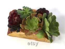 Rosalie Main sculptée Pièce maîtresse en bois récupéré avec succulentes vivantes assorties