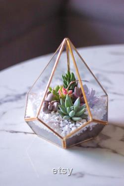 Terrarium géométrique d or- Diamant en forme de plantes succulentes réelles